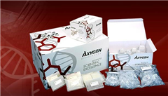 小鼠碳酸酐酶2酶免試劑盒,(CA-2)ELISA檢測試劑盒