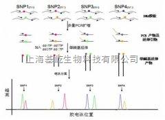 Multiplex SNaPshot SNP分型法