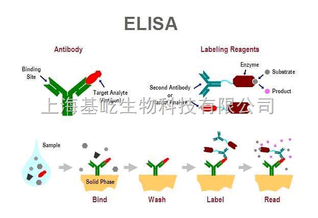 Elisa检测服务