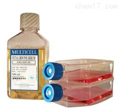 小鼠Ⅱ型肺泡上皮細胞品牌