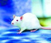 动物实验检测