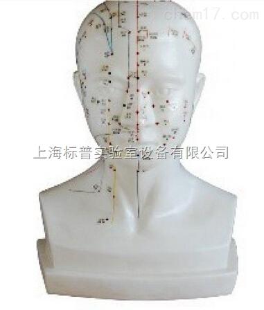 头针灸模型 20CM 中医专科训练模型