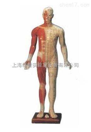 高84cm 十四经穴模型|中医专科训练模型