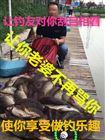 钓友分享专攻黑坑鱼塘鲤鱼饵料-鲤鱼底窝饵料