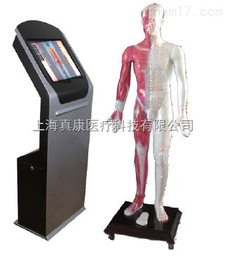 多媒体人体针灸穴位交互数字平台(针刺推拿)