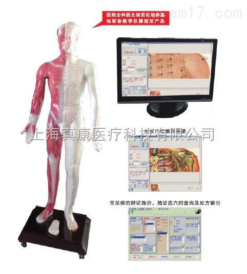 光电感应多媒体人体针灸穴位发光模型(针刺推拿)