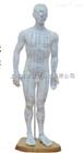 ZK-XC503A/B/C人体针灸模型 男性50CM(PVC材质)