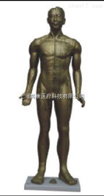 半皮肤铜人针灸模型(PVC树脂材质)
