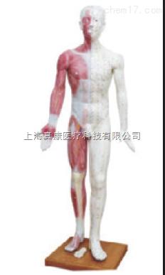 人体针灸模型(pvc树脂材质)