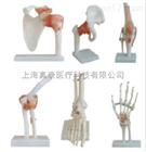 关节模型(肩、髋、膝、肘、脚、手)(人体骨骼)