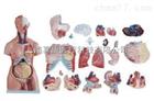 两性躯干模型(人体骨骼)