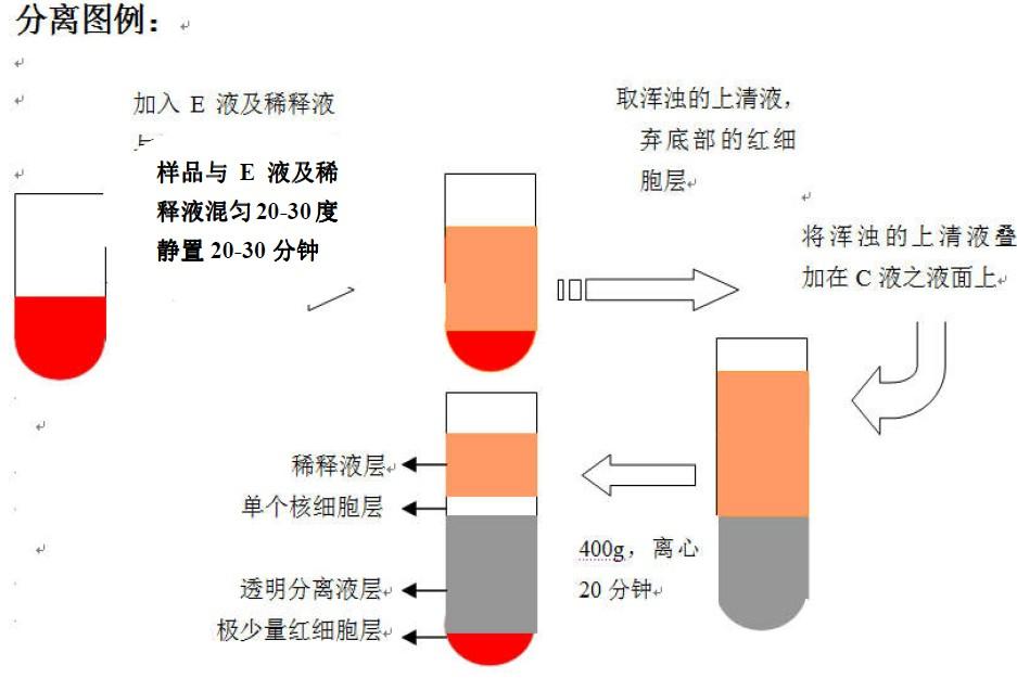 通善生物新推出脾脏组织单个核细胞分离液试剂盒系列