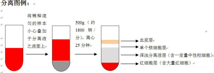 原代细胞培养步骤