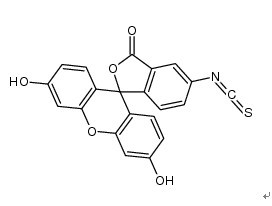 FITC 异硫氰酸荧光素、FLUORESCEIN ISOTH