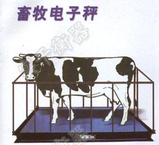 畜牧电子秤