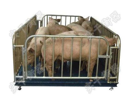 动物专用电子秤