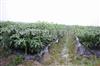 内蒙古专业生产地膜—除草地膜—地膜Z新报价