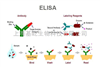 酶联免疫(ELISA)