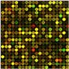 JRD207基因芯片实验外包