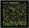 JRD203表达谱芯片实验