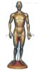 人体针灸模型(铜人针灸穴位pvc树脂材质)